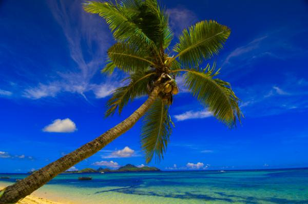 coconut tree research papers Contact us corporate office 4th floor, r danny williams building 28-48 barbados avenue, kingston tel: (876) 754-6526 fax: (876) 754-2143 communications@svlotteriescom.